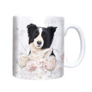 MUKI_BORDER_COLLIE
